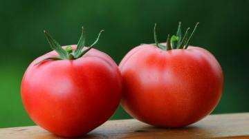 Tomatoes: thin the blood, cure hypertension, diabetes, and even oncology