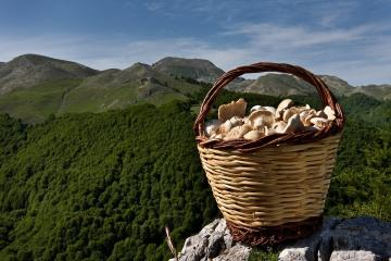 What mushrooms collected in the Crimea?